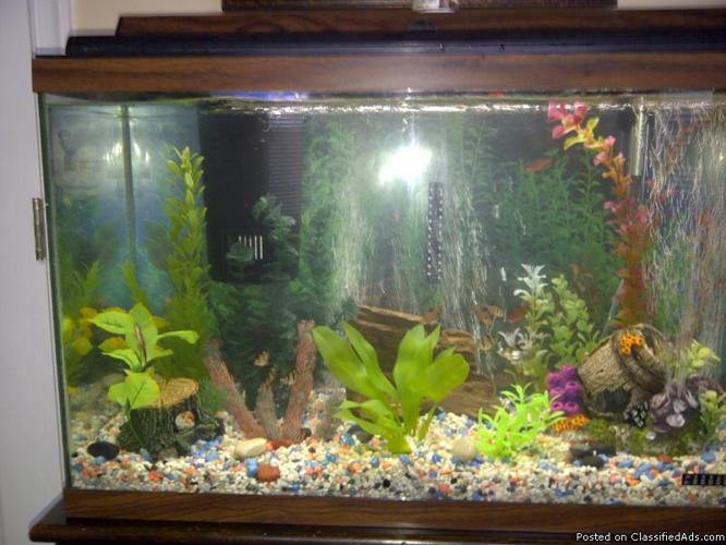 29 Gallon Fish Tank, Stand & Fish
