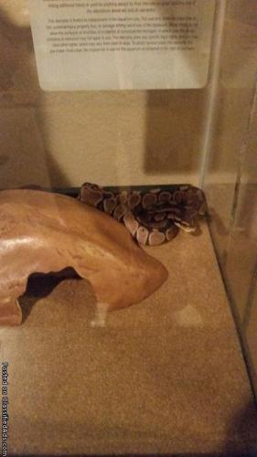 baby ball python, aquarium, heating pad, rock cave and water dish