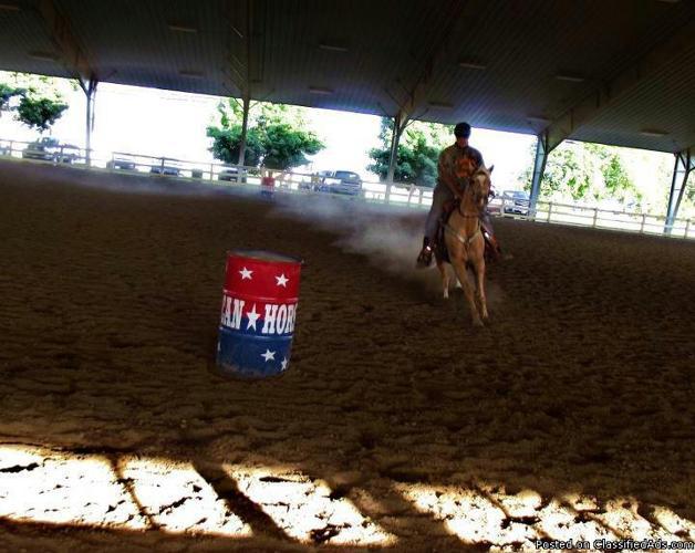 barrel horse for lease