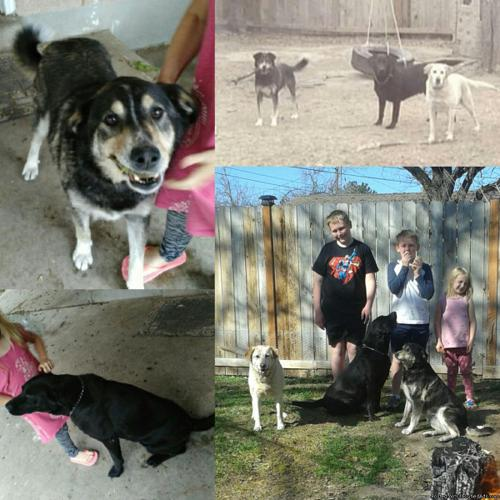 Dogs who need a family!