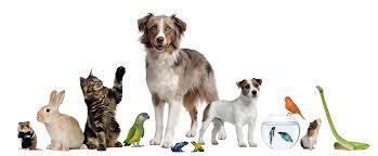 Fetch Extreme Pet Business Profits