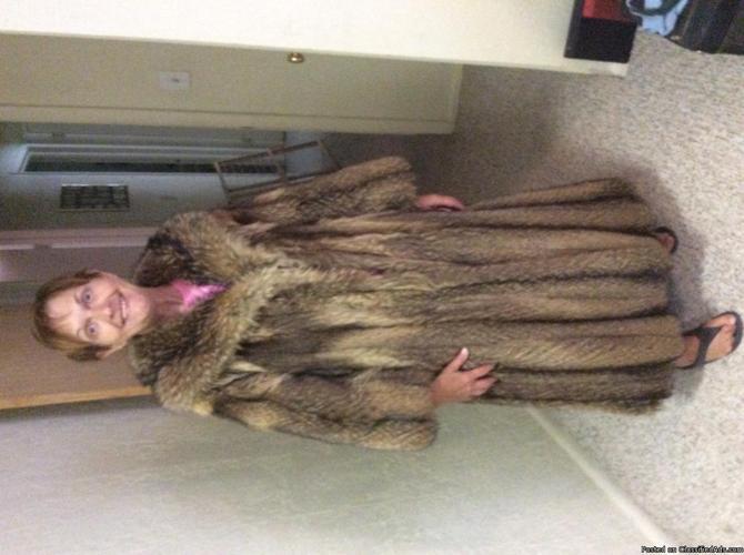 Fur coat Tanuki, also referred to as Japenese raccon