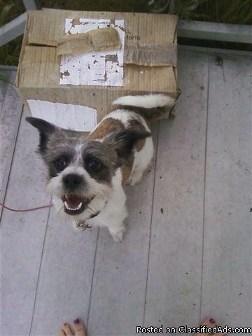 HERE IS YOUR ROMEO-SHITZ-ZHU POM