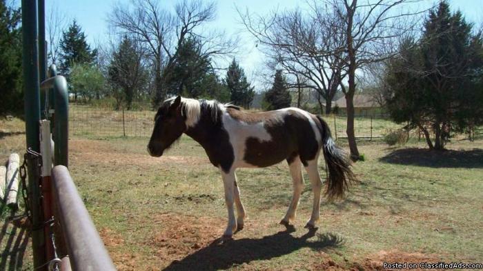 Horses, Tacks, & a saddle for sale - Price: 1200