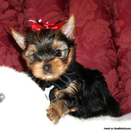 Little Bentley