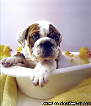 Professional Dog Grooming - All Breeds only $35.00
