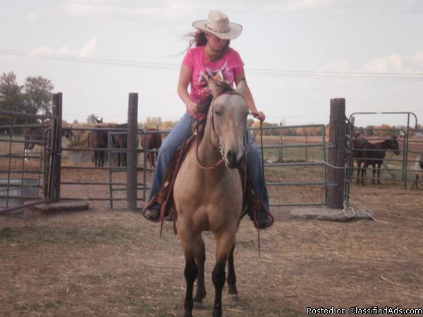 Quarter Horse Buckskin