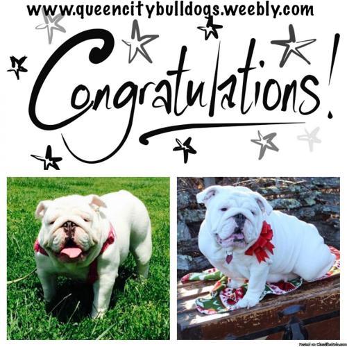 Queen City Bulldogs Meet n greet